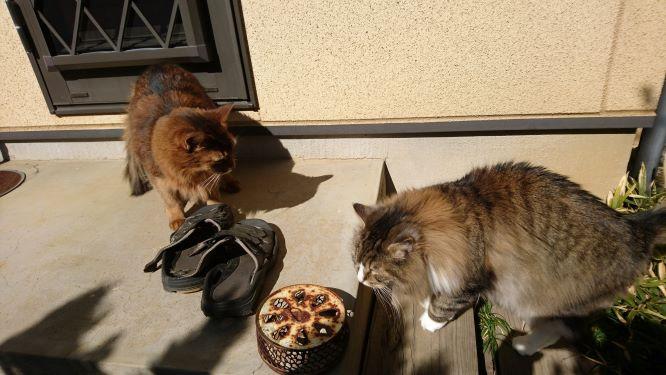 クンクン、臭いチェックに余念がない猫、トトとチー