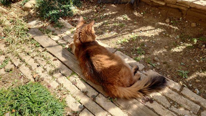 外でまったり過ごす猫、チー