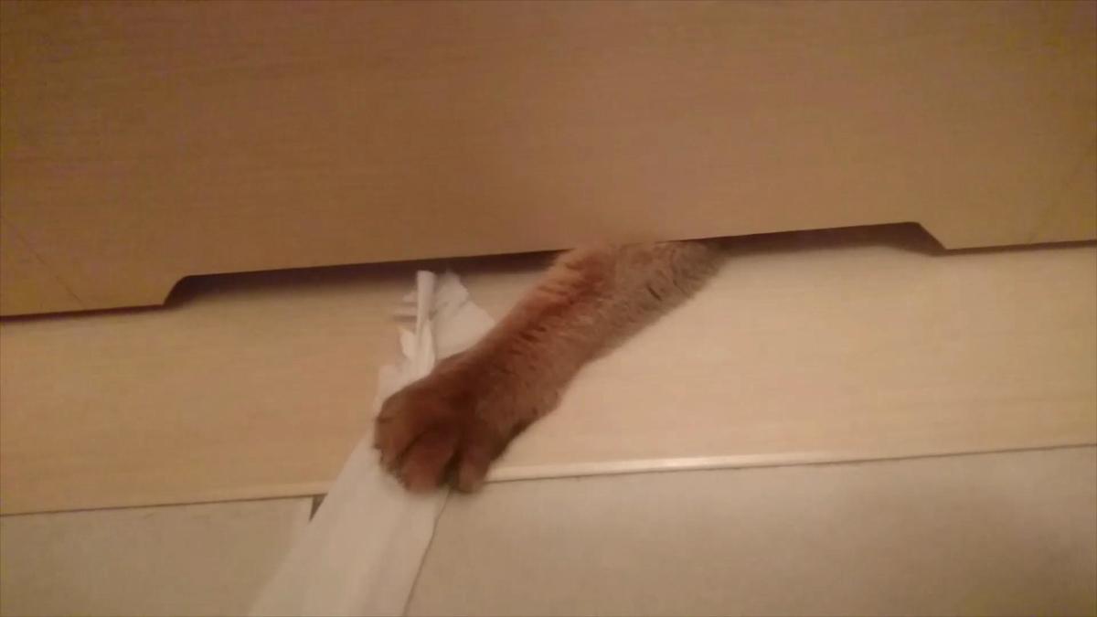 トイレの扉から手がニョキっと、猫の手でした