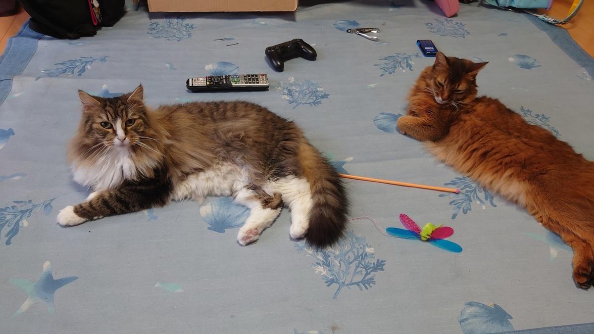 シンクロする猫、トトとチー