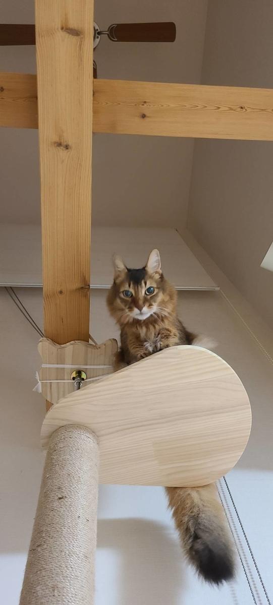 高いところから失礼しますの猫、チー