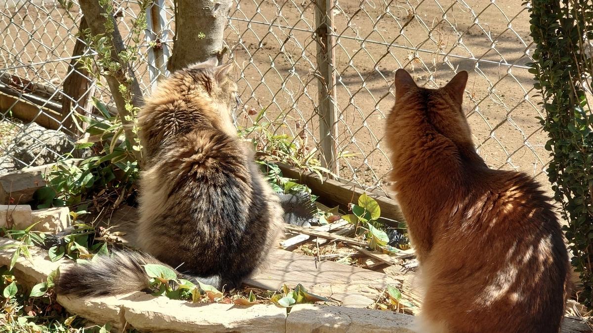 俺の背中を見て学べと教える猫、トトとチー