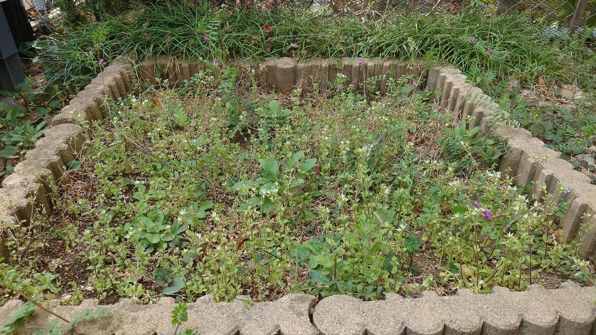 荒れ果てた花壇のBefore