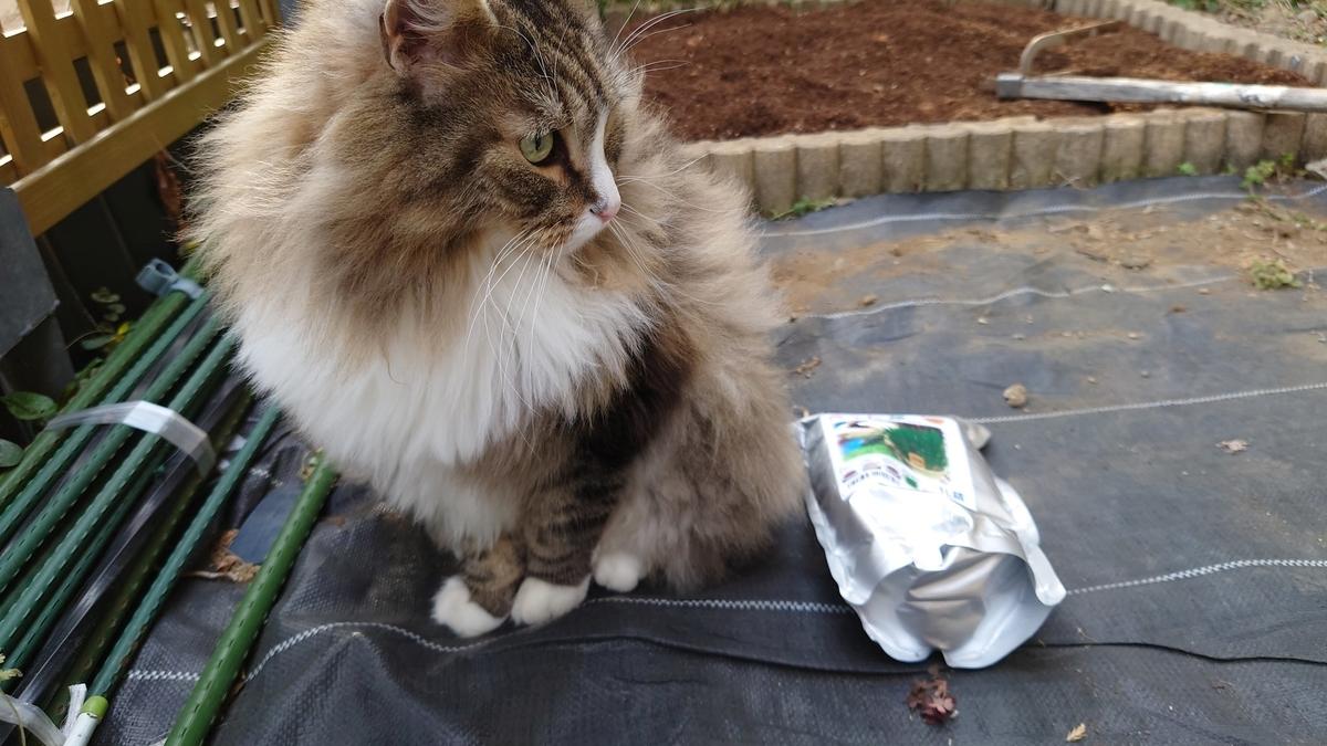 猫草の種と猫