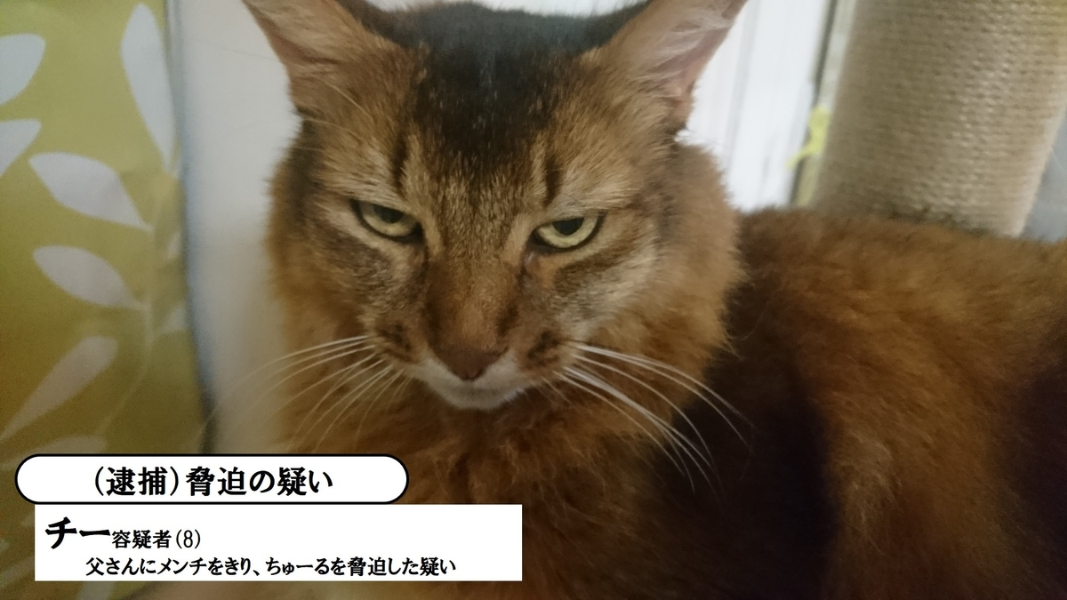 悪い顔選手権に参加する猫、チー
