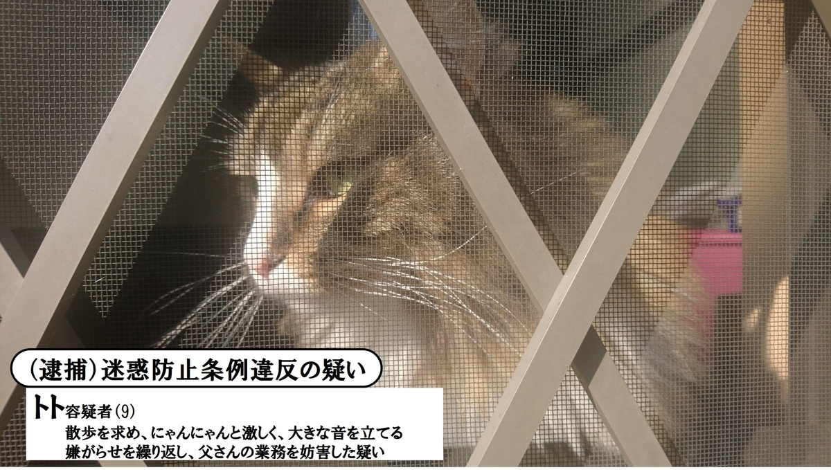 悪い顔選手権に参加する猫、トト