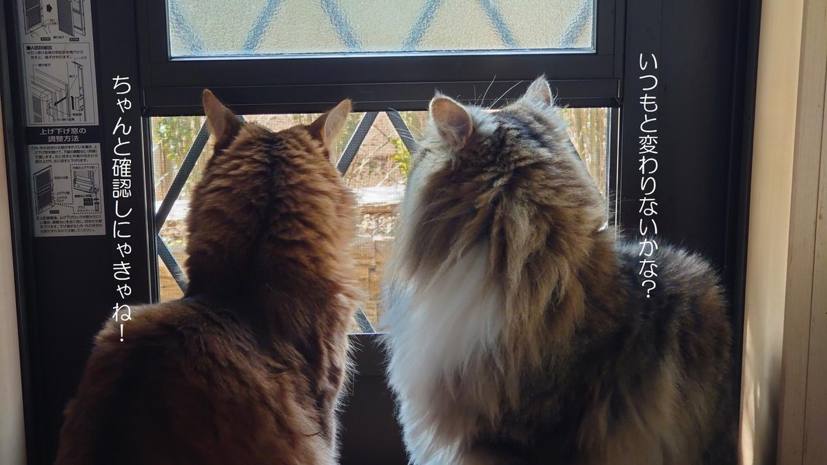 お庭にパトロールに行きたい猫、トトとチー