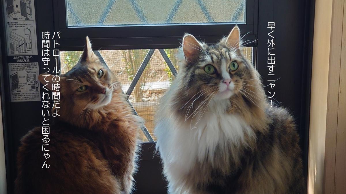 庭に出たいとせかす猫、トトとチー