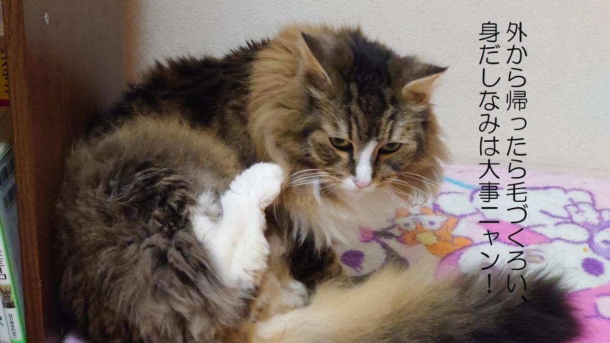 外から帰ったら毛づくろいする猫、トト