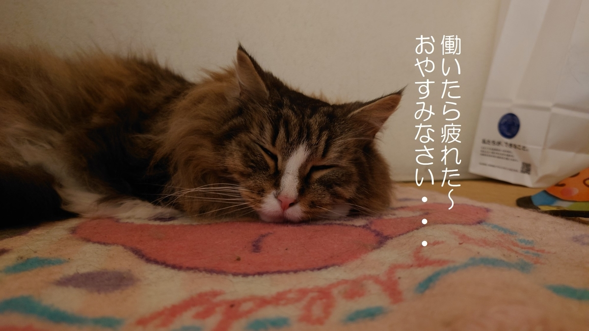 疲れてお休みタイムの猫、トト