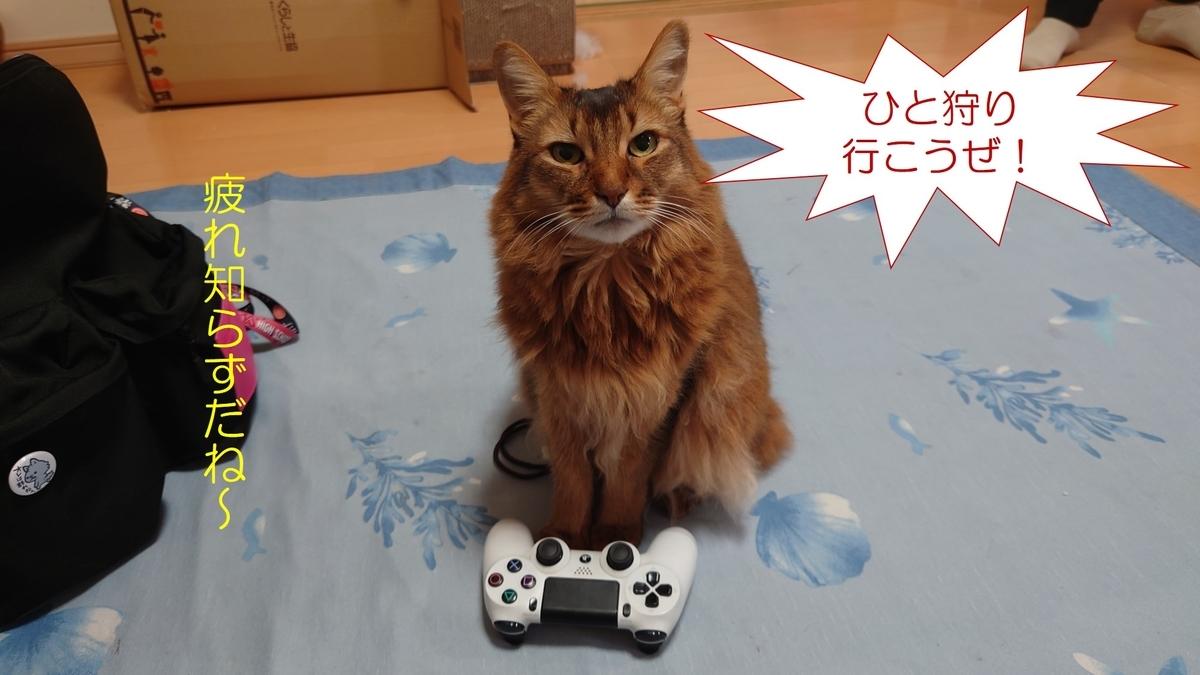 ゲームをしたがる猫、チー