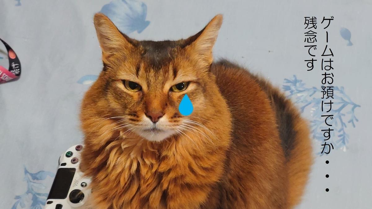 ゲームを取り上げられて泣く猫、チー