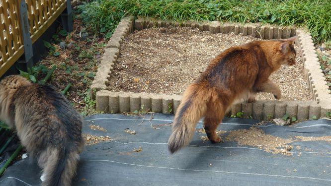 猫草の森のパトロール