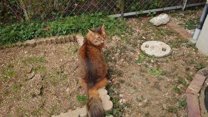 猫草の芽が出たことを教える猫、チー