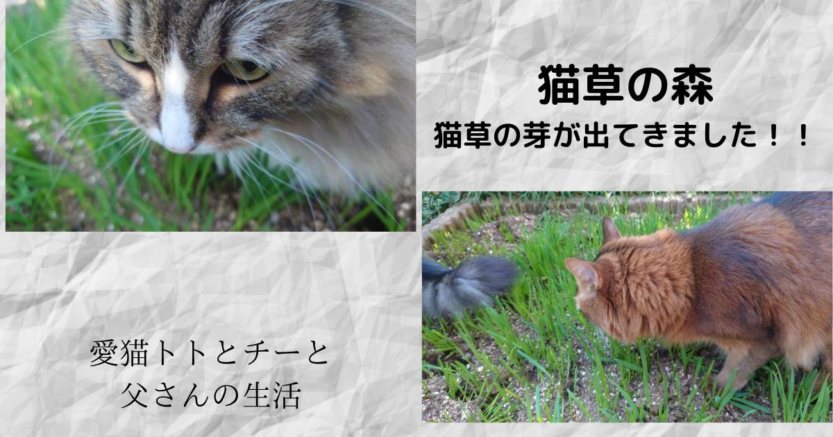 f:id:cat-cat-48:20210408193625p:plain