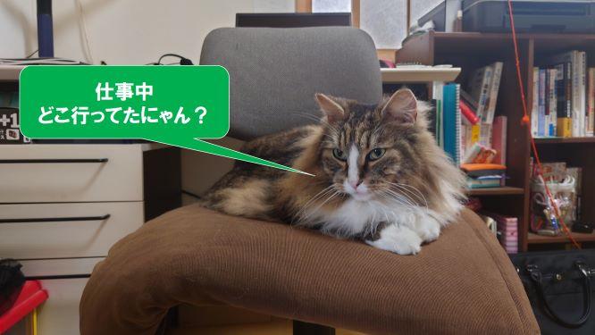 飼主の座席を奪った猫、ノルウェージャンフォレストキャット