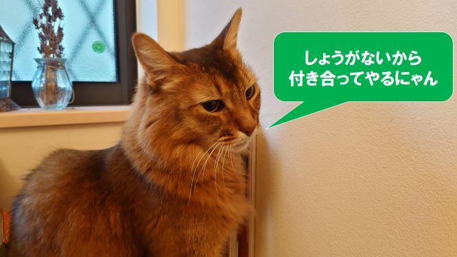 トイレでどや顔の猫、ソマリ