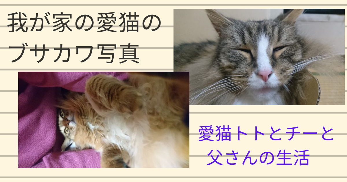 f:id:cat-cat-48:20210422191314p:plain