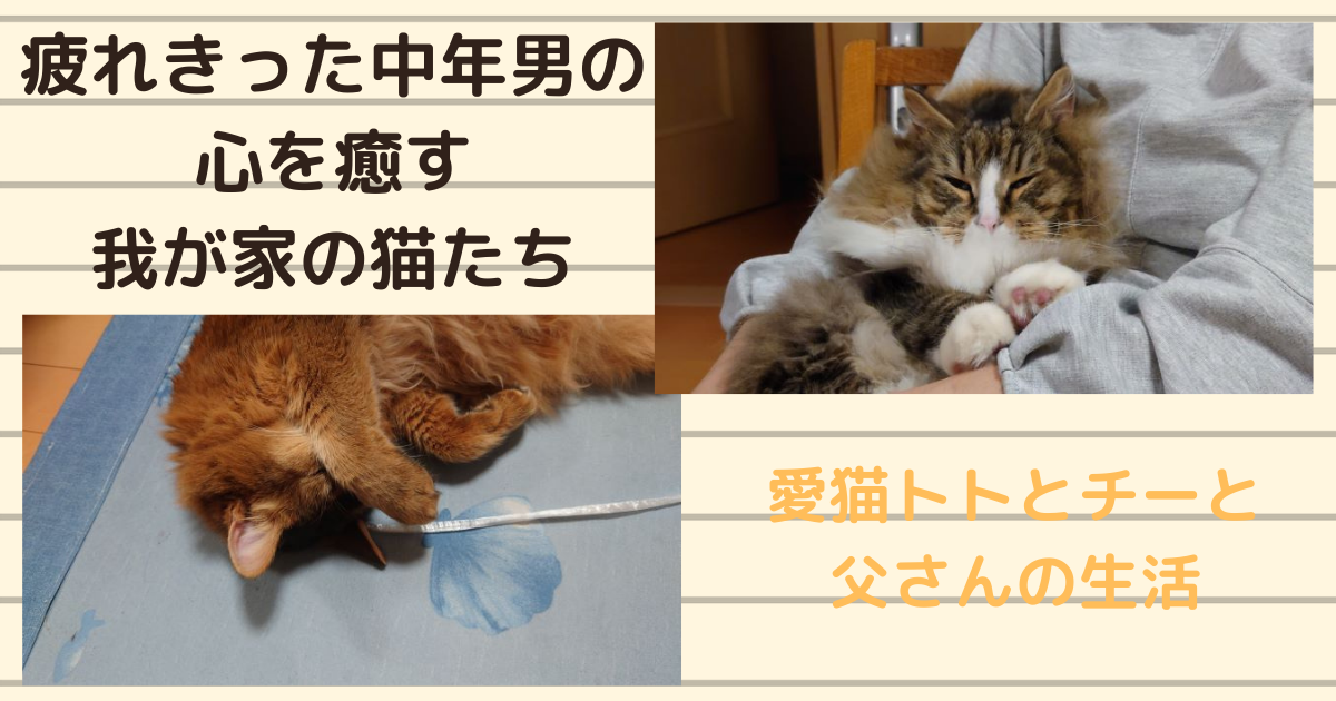 f:id:cat-cat-48:20210425183302p:plain