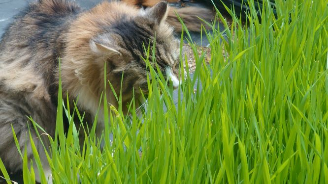 猫草の森で