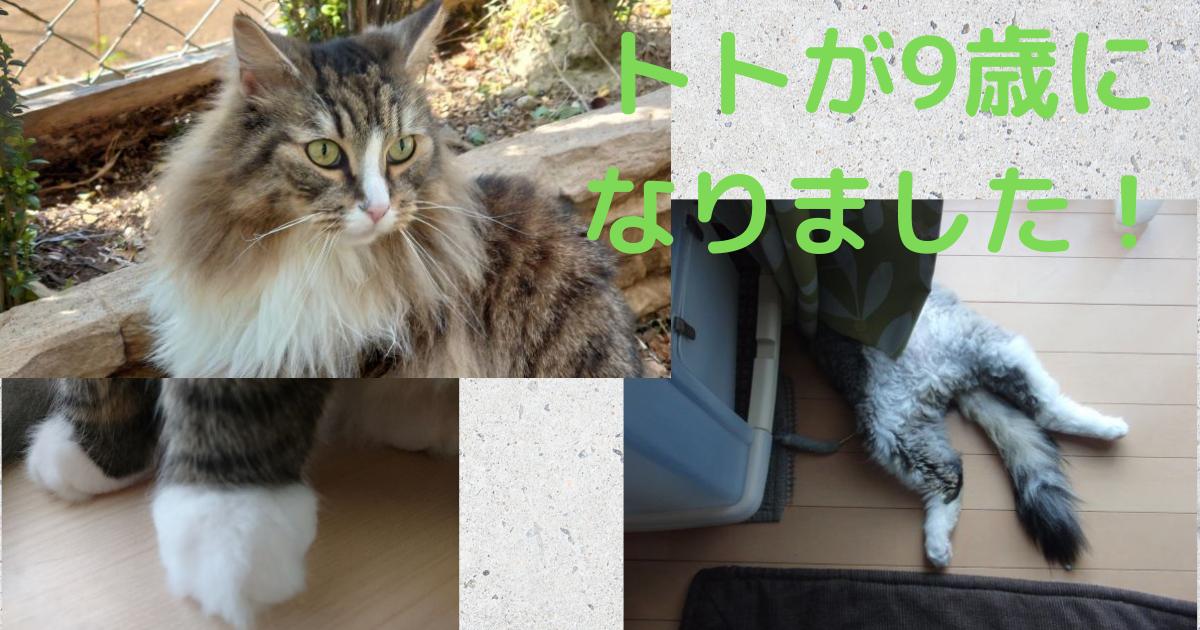 f:id:cat-cat-48:20210430170529p:plain