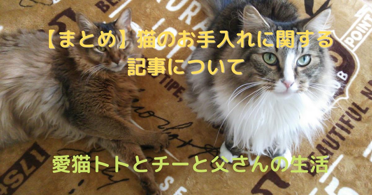 f:id:cat-cat-48:20210501125421p:plain