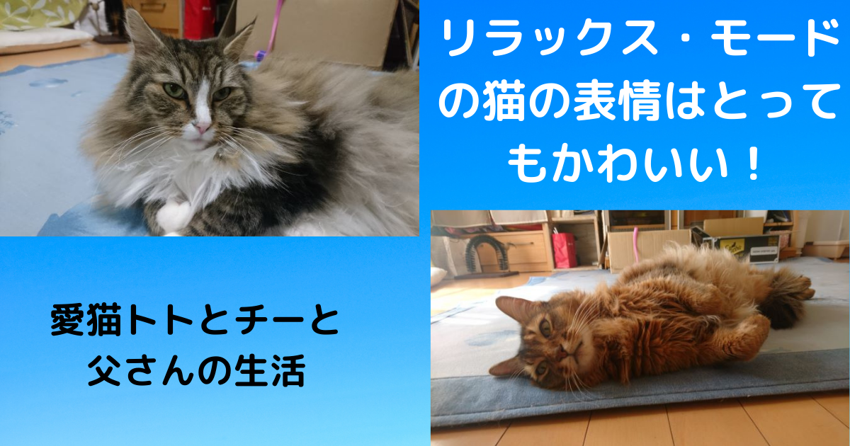 f:id:cat-cat-48:20210502064155p:plain