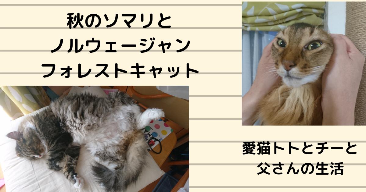 f:id:cat-cat-48:20210502064958p:plain
