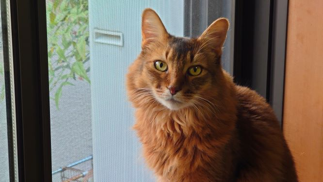 キリリとした表情を見せるソマリ、猫のチー