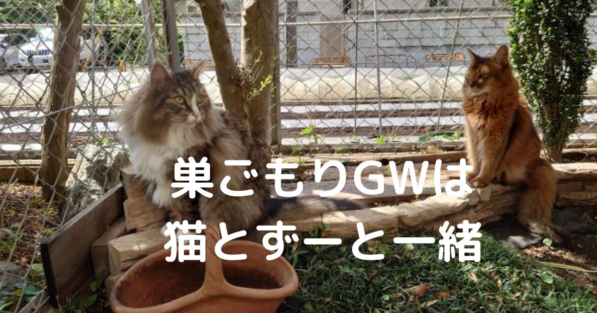 f:id:cat-cat-48:20210503170153p:plain
