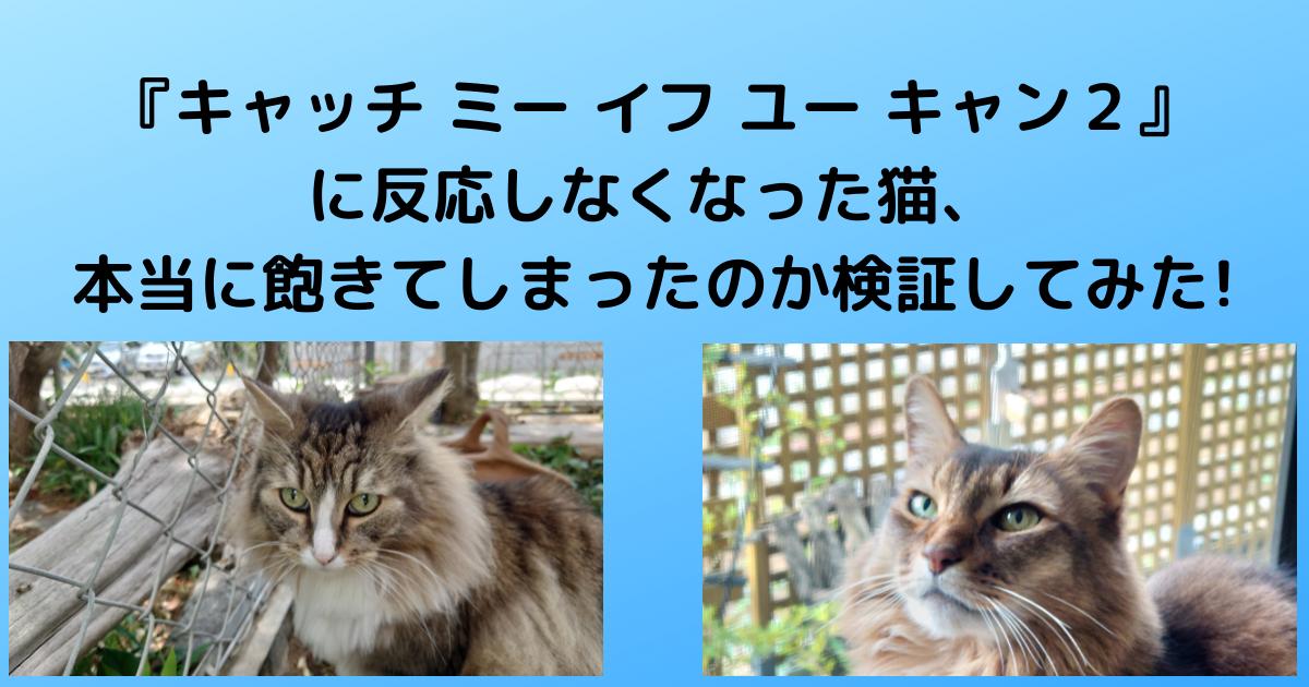 f:id:cat-cat-48:20210509182015p:plain