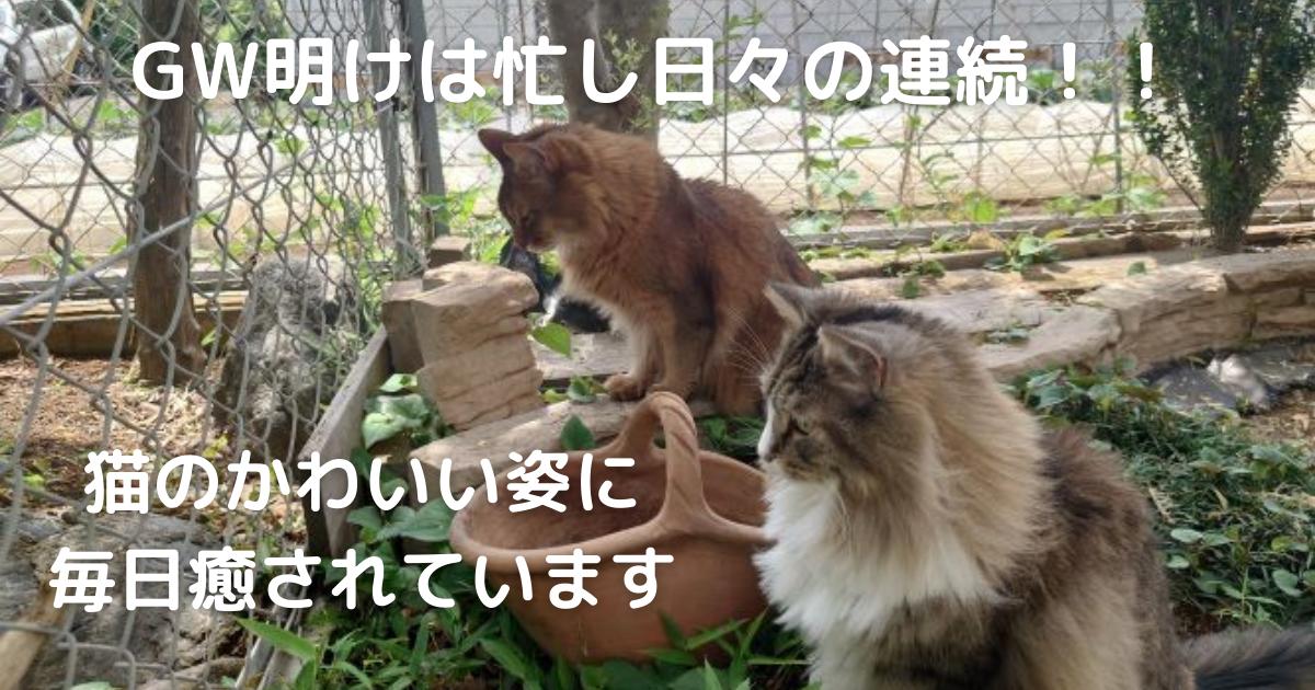 f:id:cat-cat-48:20210516113939p:plain