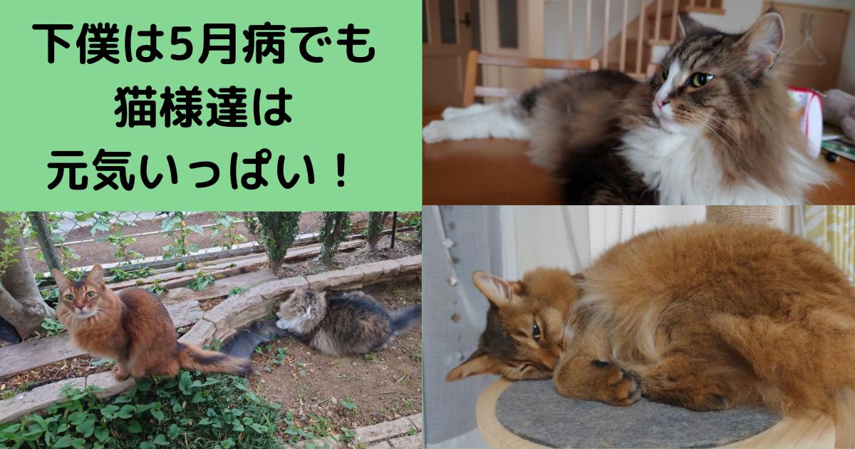 f:id:cat-cat-48:20210523145615p:plain