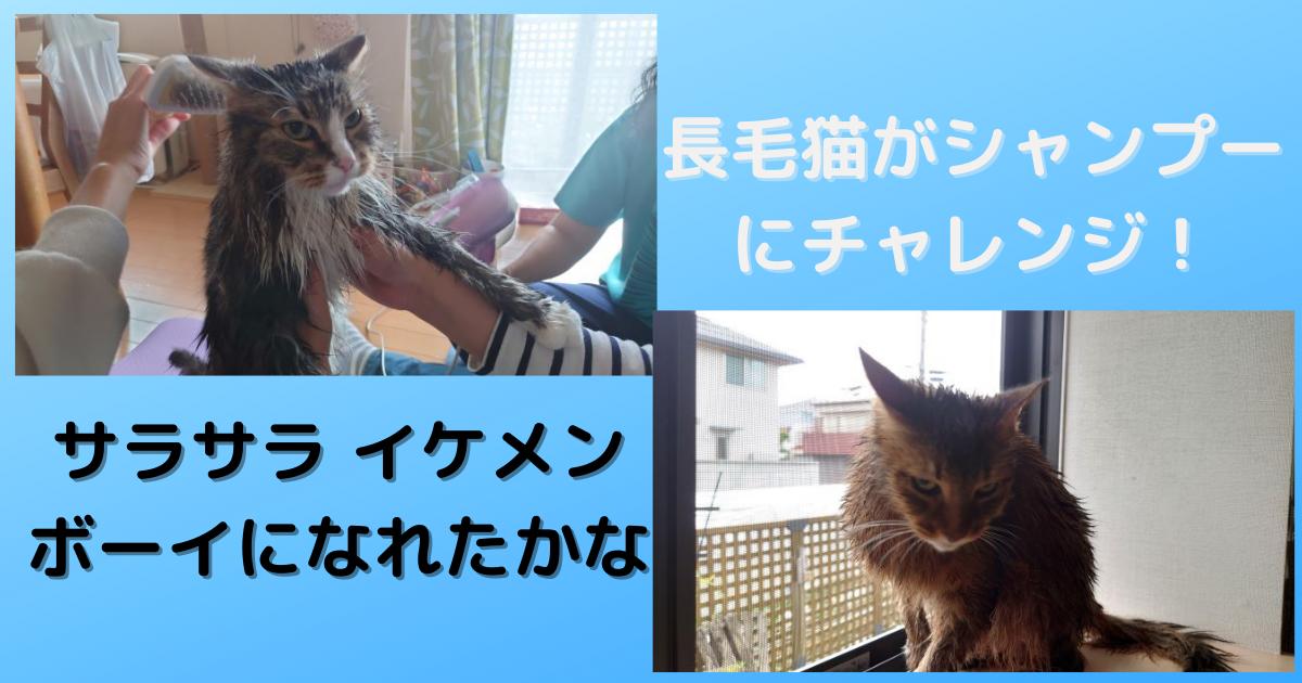 f:id:cat-cat-48:20210530152245p:plain
