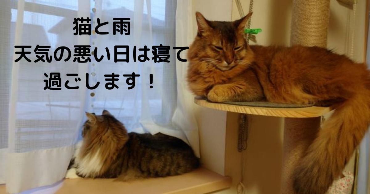 f:id:cat-cat-48:20210606131944p:plain