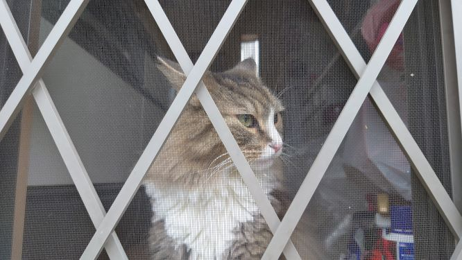 外に出せと主張する猫