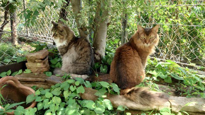 日差しが出たら木陰にGO,トトとチー