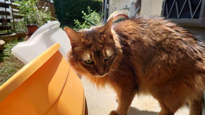 猫トイレとソマリのチー