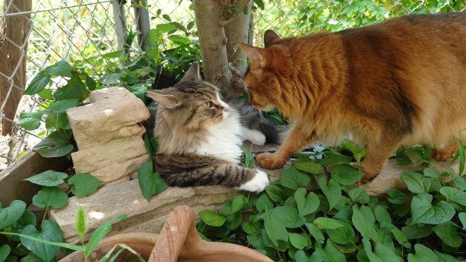 見つめ合う二人、トトとチー