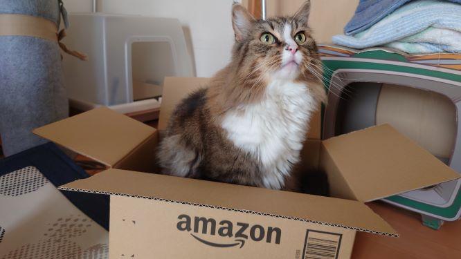 AMAZONの箱にとりあえず入る猫、ノルウェージャンフォレストキャットのトト