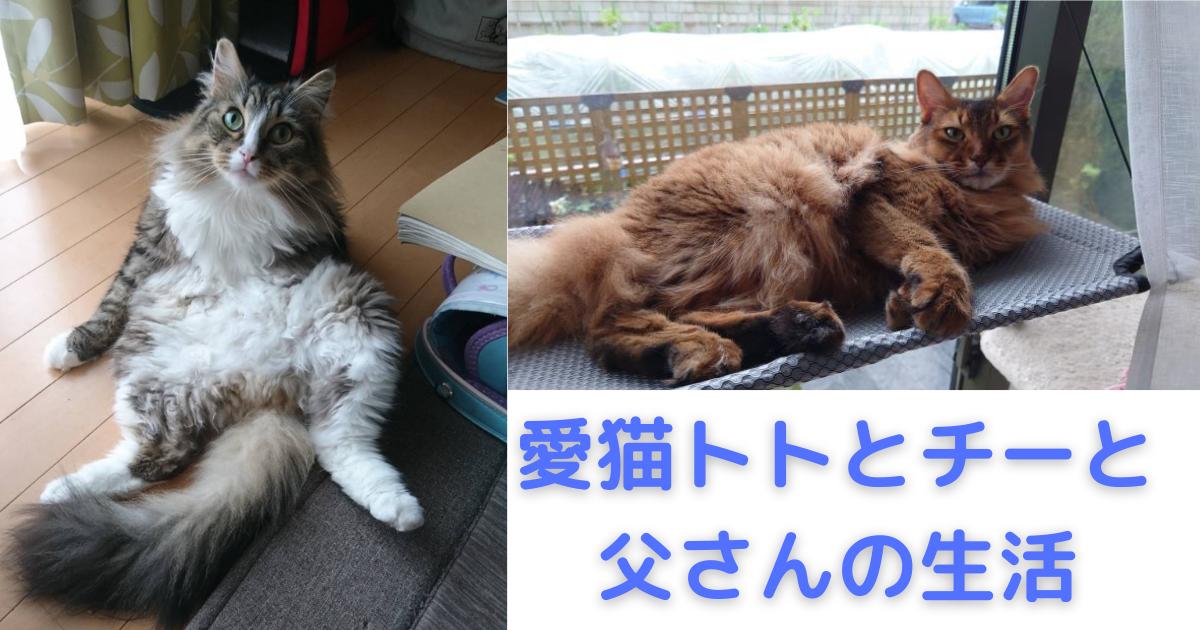 f:id:cat-cat-48:20210809120549p:plain