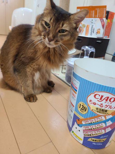 ちゅーるを御所望な猫、ソマリのチー