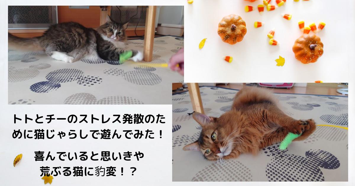 f:id:cat-cat-48:20210925082523p:plain