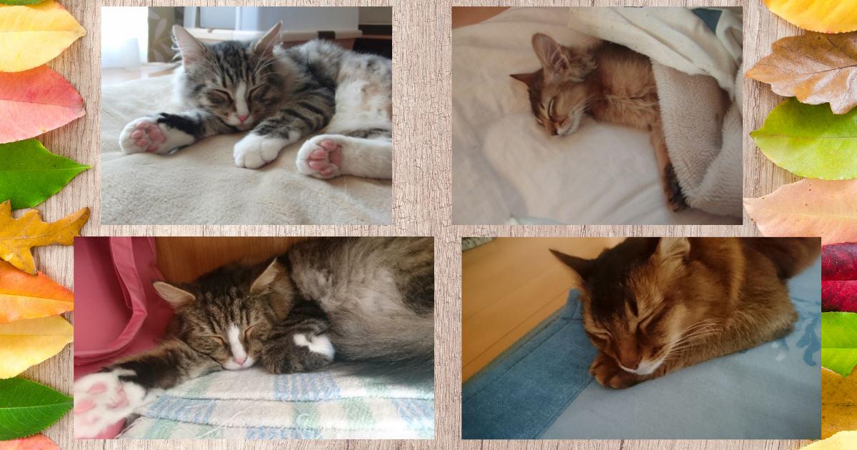 f:id:cat-cat-48:20210928052654p:plain