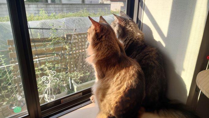 外を眺めるニャルソック中のトトとチー