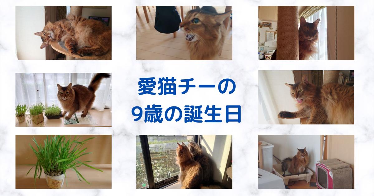 f:id:cat-cat-48:20210930190124p:plain