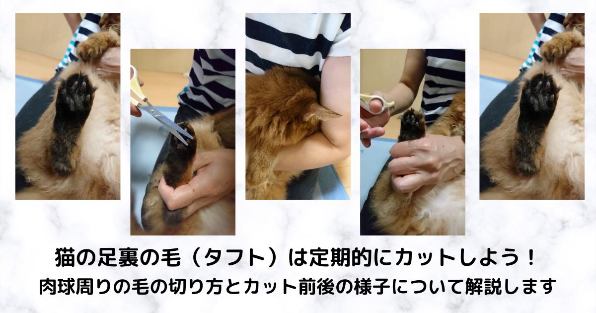 f:id:cat-cat-48:20211002051323p:plain