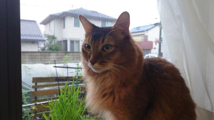 かあさん、ここでお別れです。わたし乙事主さまの目になりにいきます。あの煙にこまっているはずだからと言う猫、ソマリのチー