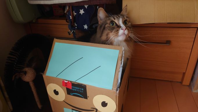 掃除機から逃げる猫、ノルウェージャンフォレストキャットのトト