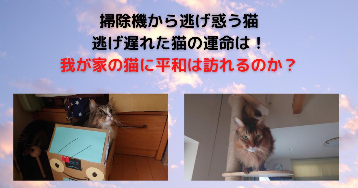 f:id:cat-cat-48:20211009045633p:plain